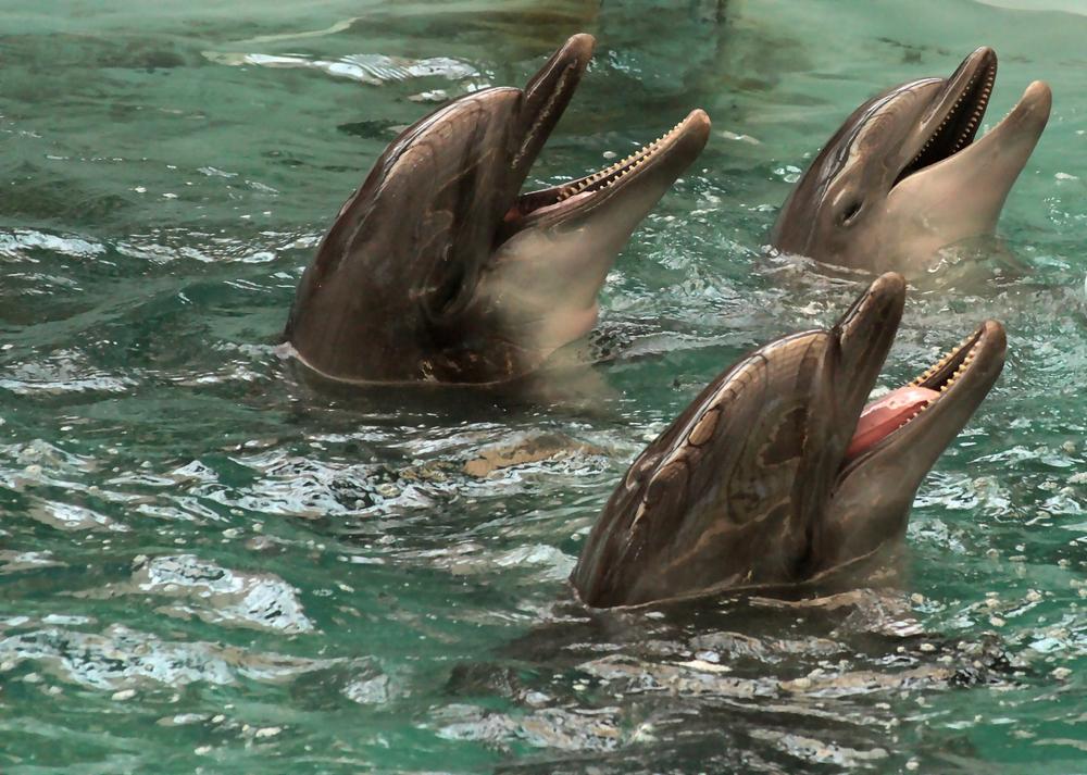Дельфинам нравится мультфильм про Губку Боба — биологи