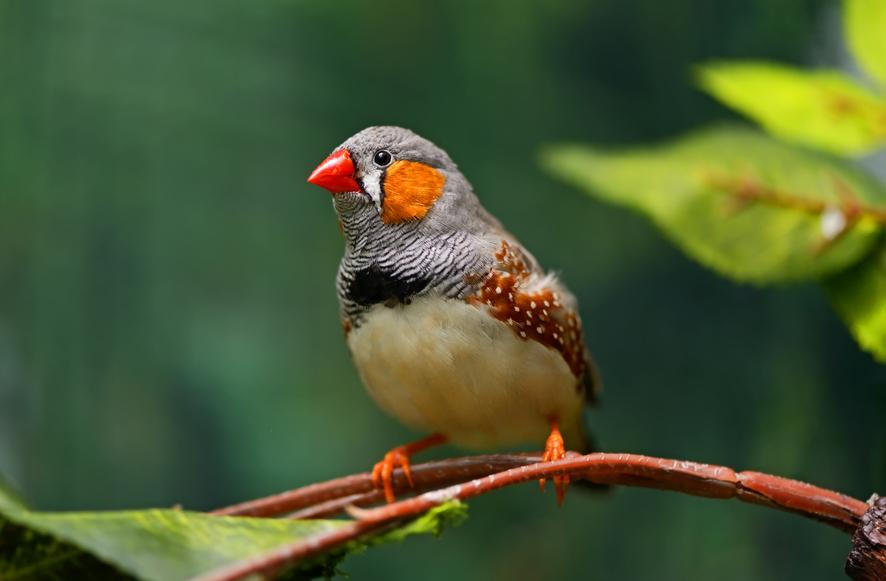 Авиапассажир пытался провезти в бигуди 70 живых птиц