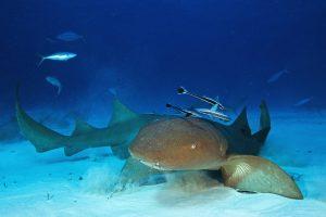 Эмбрионы акулы питаются братьями и сестрами в утробе