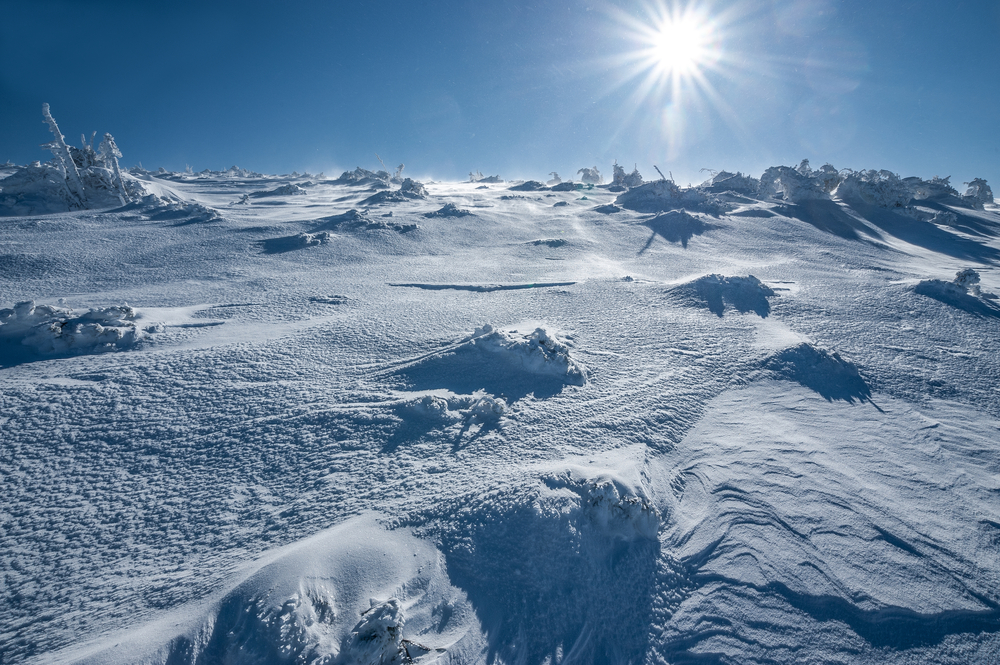 В Антарктиде будут искать неизвестные формы жизни
