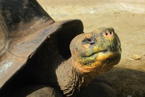 Генетики раскрыли секрет долголетия гигантских черепах