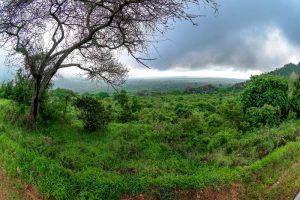 Новый подвид деревьев исчез из джунглей прежде, чем был открыт