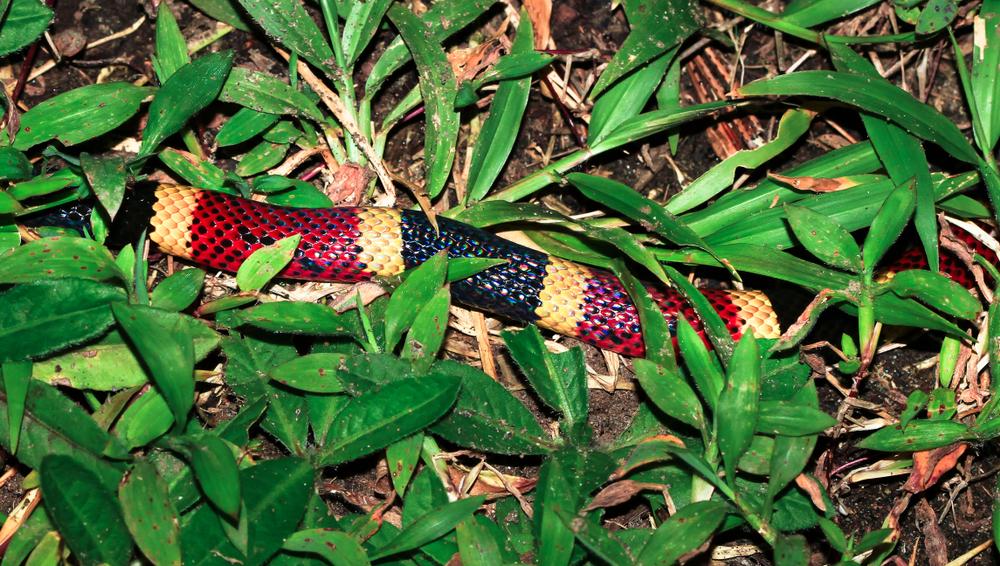 Неизвестный вид змеи обнаружен в желудке другой змеи