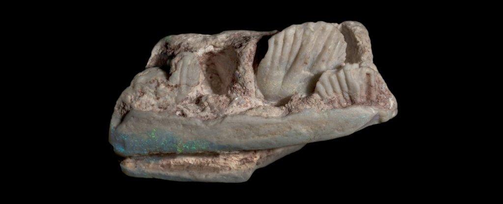 В Австралии нашли череп неизвестного динозавра