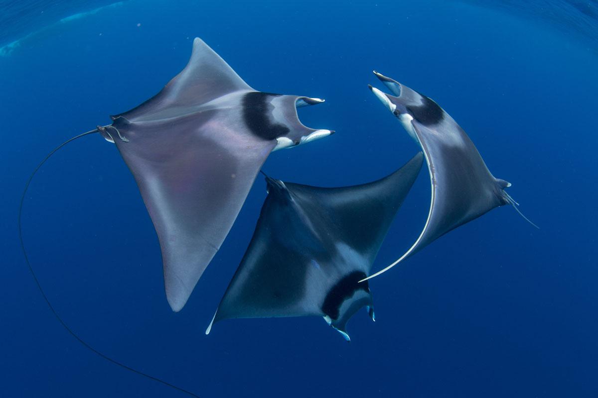 Названы лучшие подводные фото года.Вокруг Света. Украина