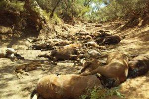 Жара в Австралии: десятки диких лошадей погибли у пересохшего источника