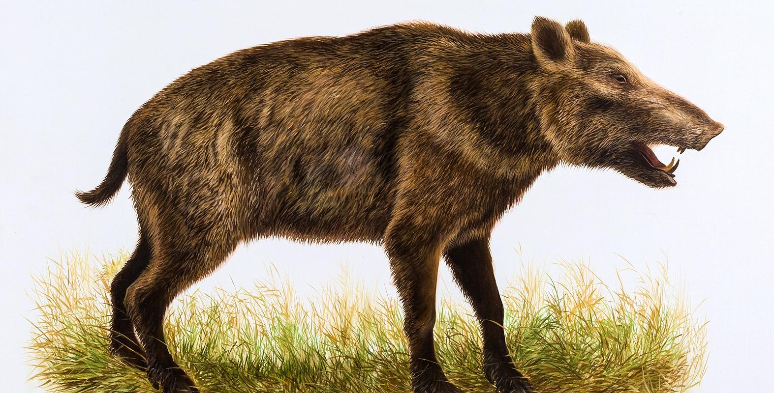 В США нашли останки свиноподобных животных возрастом 5 млн лет