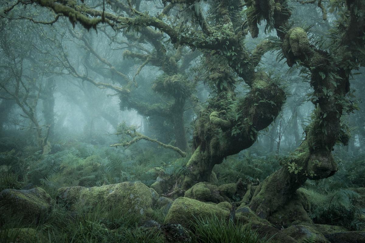 В Британии нашли лес из «Властелина колец»