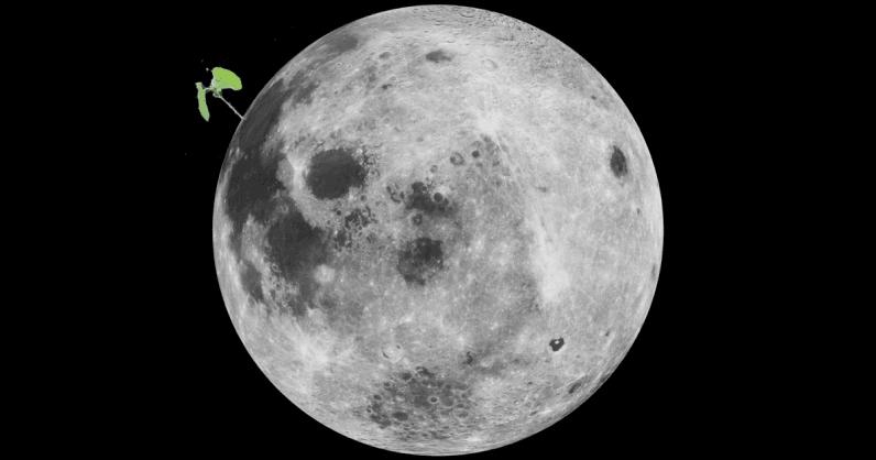 Первое «лунное» растение погибло