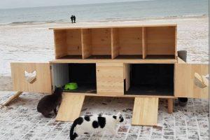 В Одессе открыли отель для бездомных котов