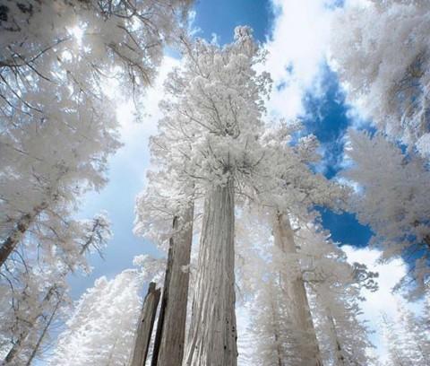 ТОП-10 снимков сказочной зимы в разных уголках мира