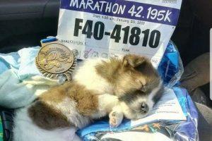 В Таиланде бегунья финишировала с потерявшимся щенком