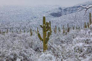 Пустыню Аризоны накрыл ледяной шторм