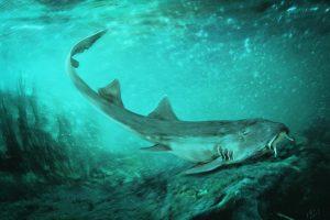 Палеонтологи открыли акулу — ровесницу динозавров