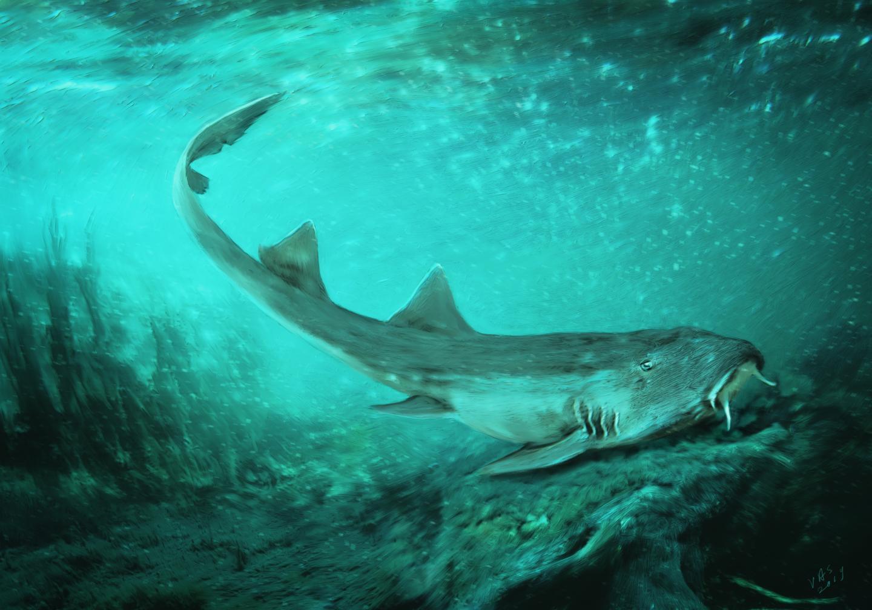 Палеонтологи открыли акулу — ровесницу динозавров.Вокруг Света. Украина