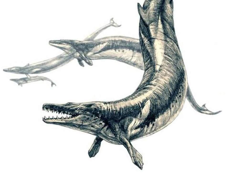 В желудке древнего кита палеонтологи нашли других хищников