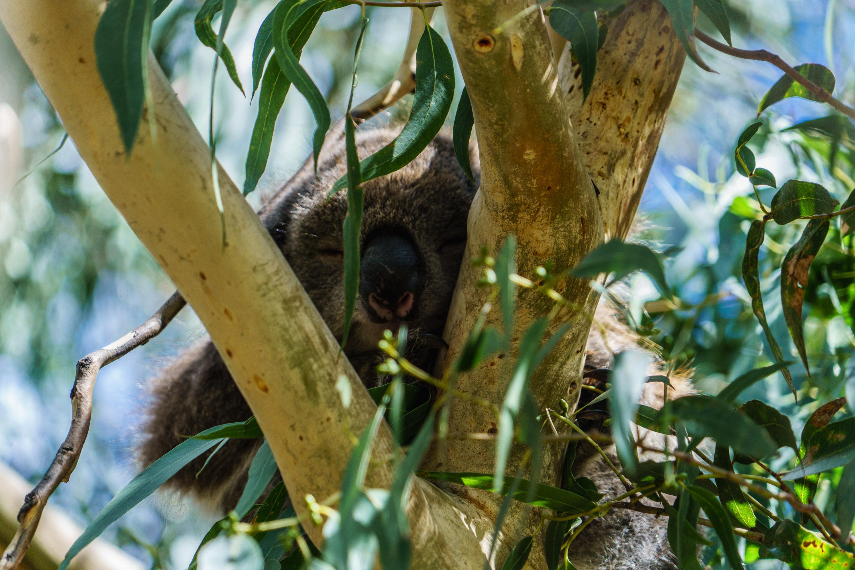 8 причин посетить Австралию Страна «вверх тормашками»: 8 причин посетить Австралию foto 5