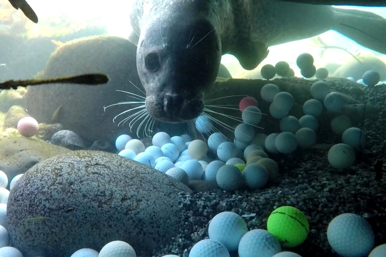 Фридайверы достали со дна Тихого океана 2,5 тонны мячей для гольфа