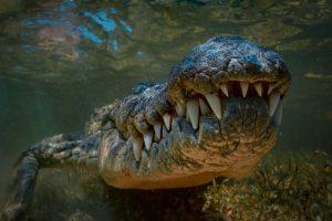 Филиппинец покусал крокодила, чтобы спасти сына
