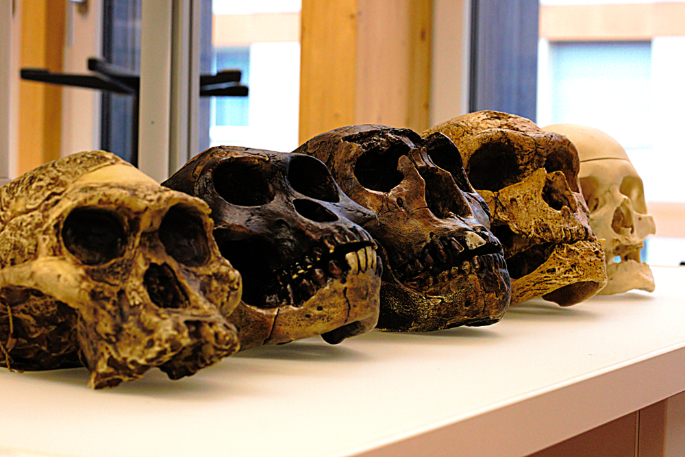 Ученые воссоздали облик древних жителей Европы