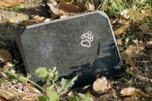 В Киеве откроют муниципальное кладбище домашних животных
