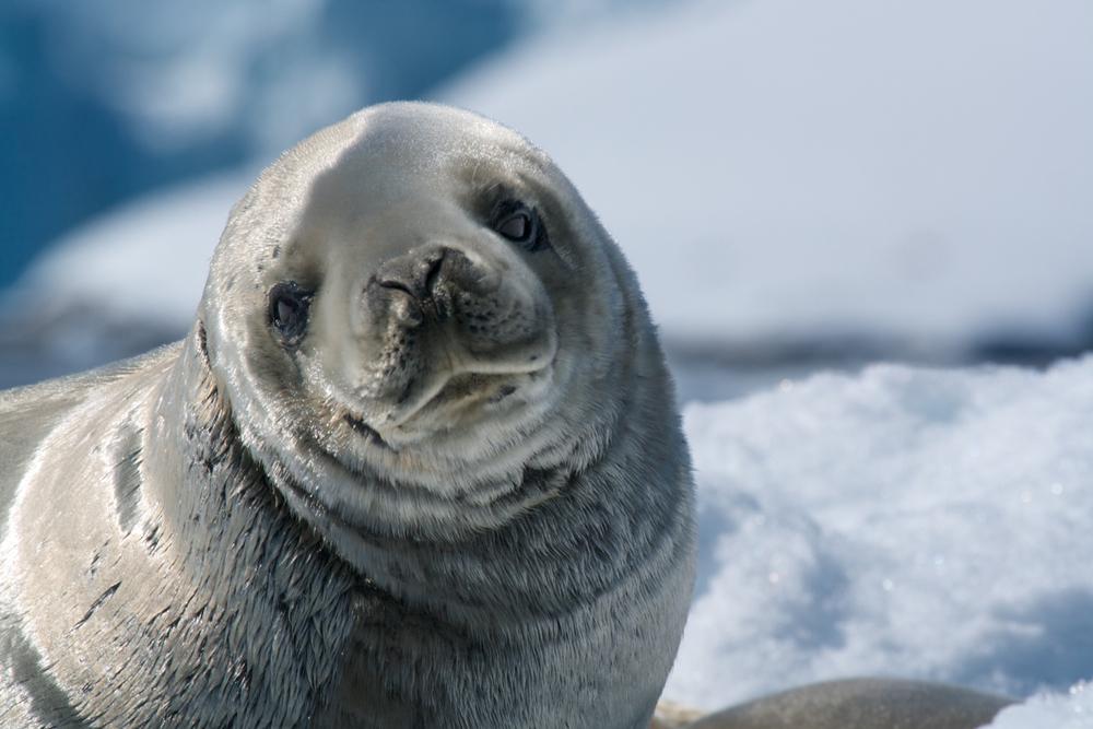 Канадский городок наводнили тюлени