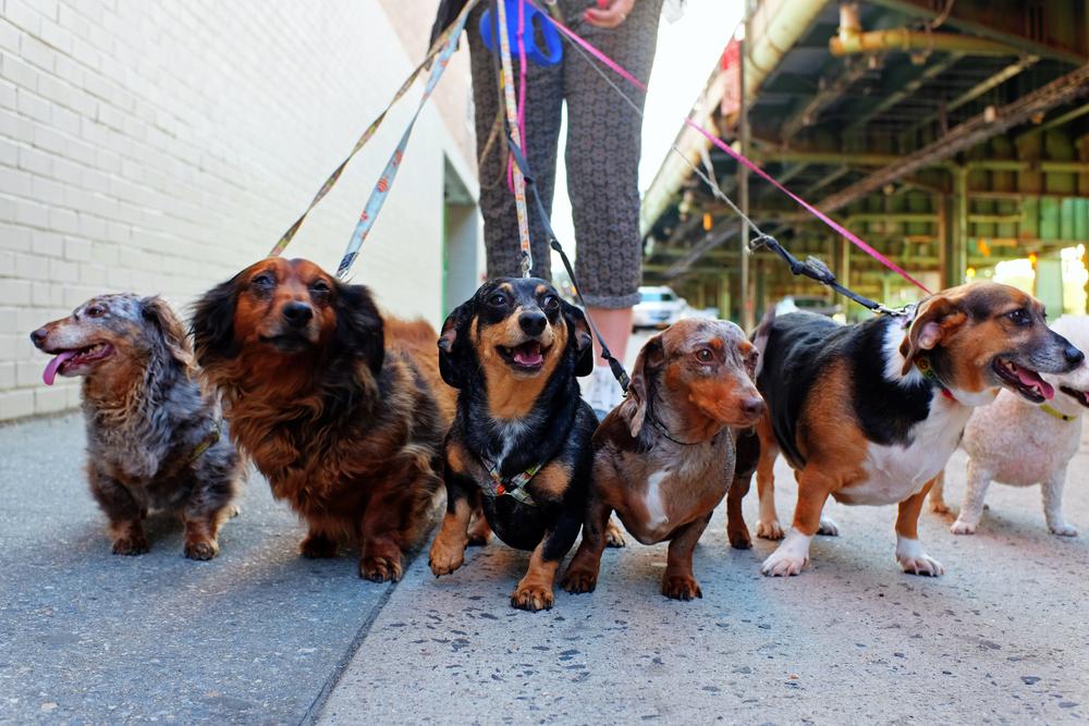 В Иране запретили гулять с собаками в общественных парках