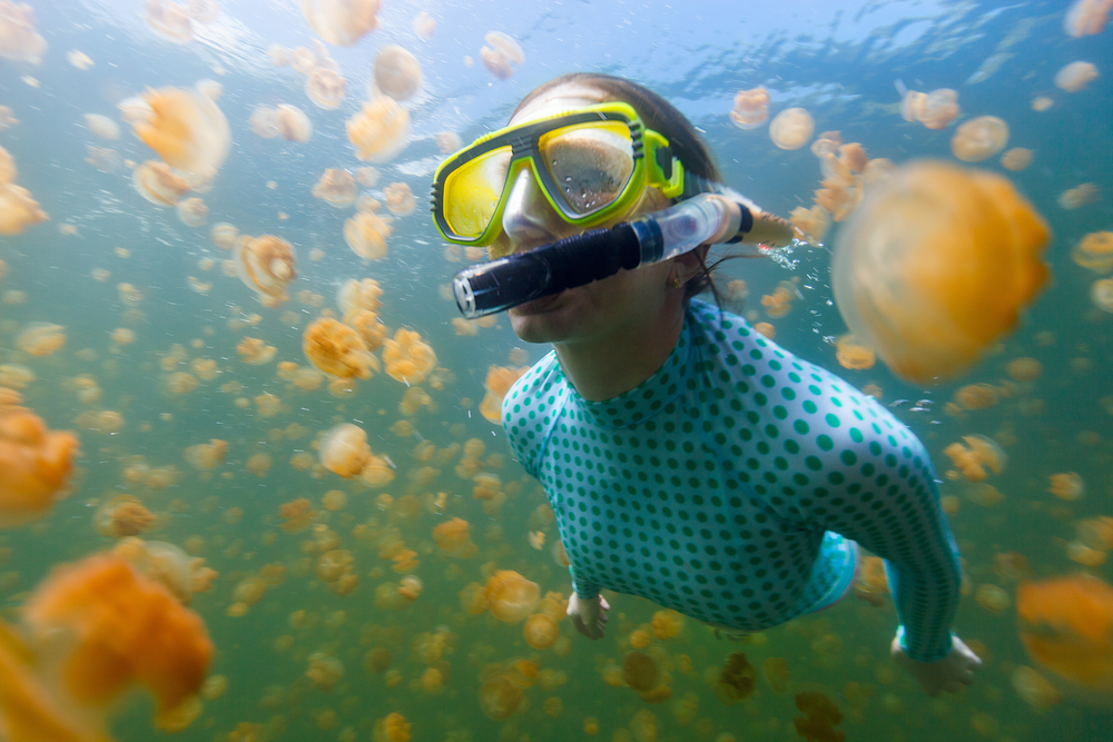 На Палау снова открыли для туристов Озеро Медуз