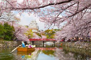 Cакура в Японии зацветет раньше обычного