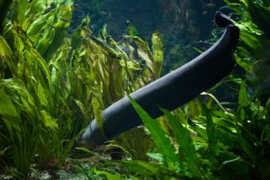 Угри в реках Европы исчезнут в ближайшие 10 лет: экологи