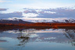 Под ледниками Арктики нашли неизвестные науке микроорганизмы