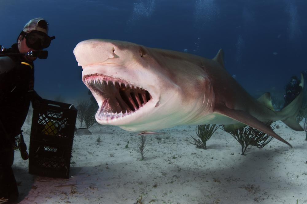 В Австралии разрабатывают костюм против акул