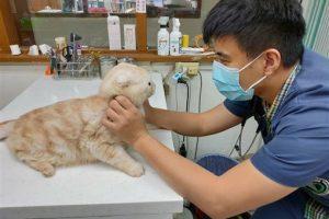 Тайваньца оштрафовали на 90 тысяч долларов за кота в посылке