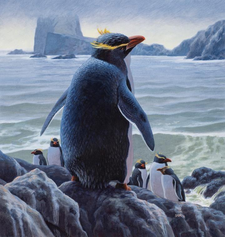 Ученые выяснили, как в Новой Зеландии появились пингвины