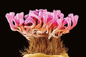Розы, пчелы и пыльца под микроскопом (фото)