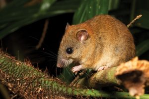 Впервые зафиксировано вымирание вида из-за глобального потепления