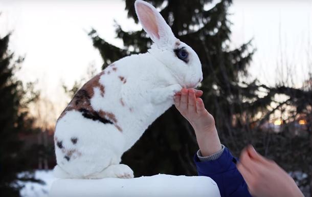 В Финляндии кролик дает лапу по команде