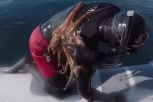 В Италии к дайверу присосался осьминог
