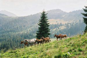 Сказочные Мармаросы: как подготовиться к походу в горы