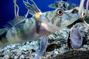Зоологи нашли в крови антарктической рыбы антифриз