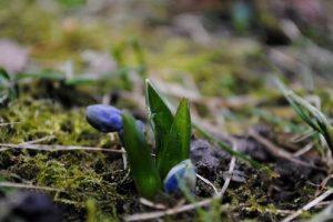 В Полтаве взошли первые цветы