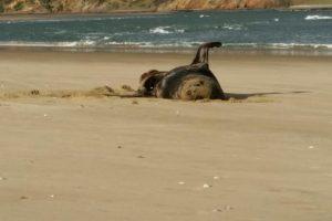 В Новой Зеландии у тюленя нашли флешку с фотографиями туристов