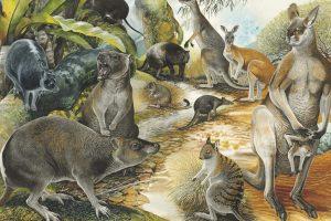 Палеонтологи раскрыли секрет великолепного прыжка кенгуру