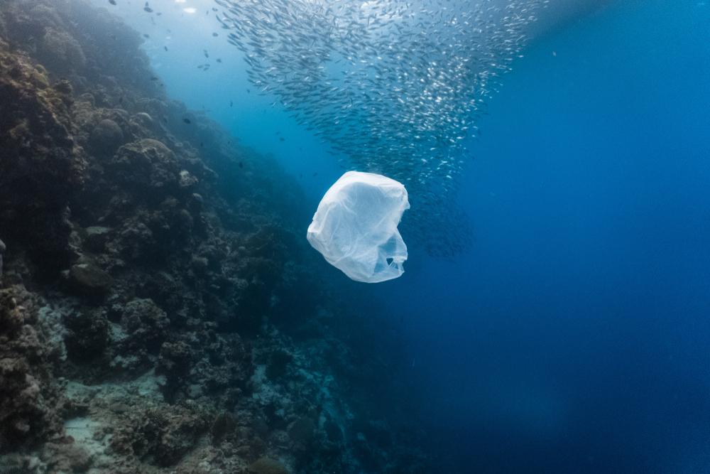 В мире не осталось морских экосистем, не загрязненных пластиком