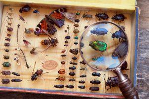 Половина видов насекомых находятся на грани вымирания