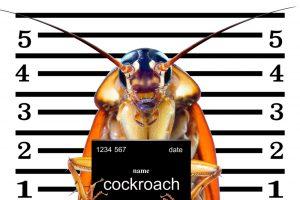 Зоопарк в Англии предлагает назвать тараканов в честь бывших возлюбленных