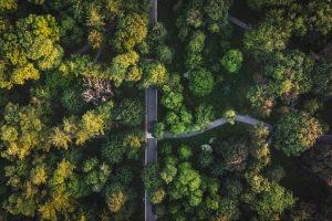 В Киеве появилась карта самых старых деревьев города