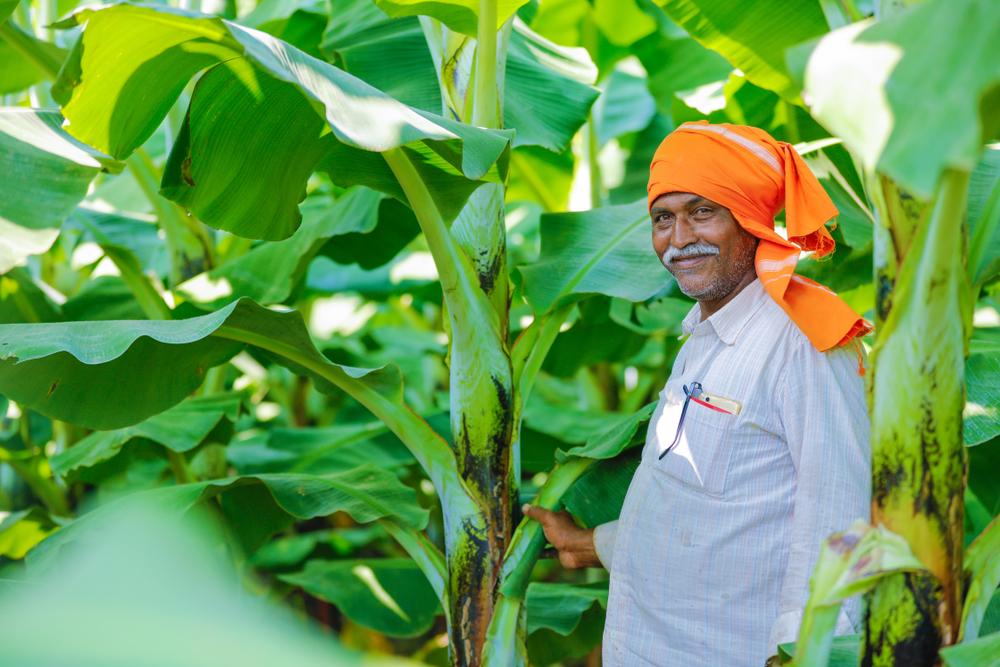 Индия и Китай – чемпионы по озеленению планеты