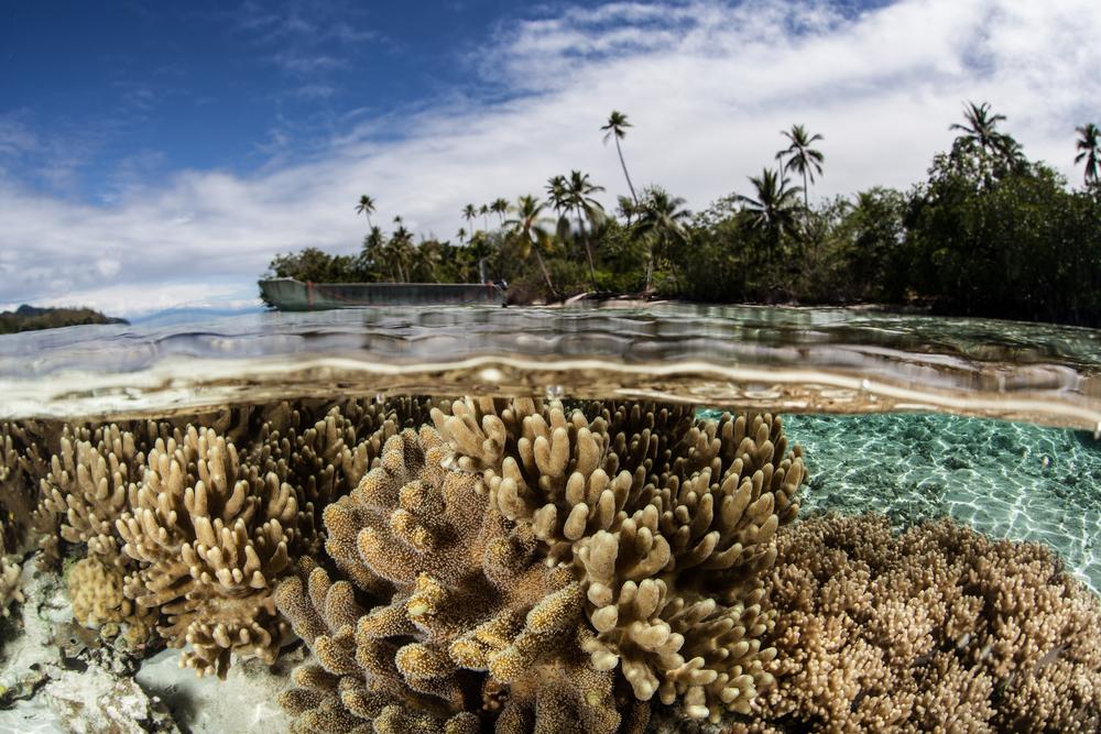 У Соломоновых Островов разлилась нефть: в опасности риф Ист-Ренелл