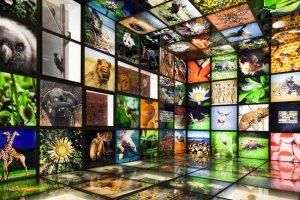 Современный уровень биоразнообразия соответствует эпохе динозавров